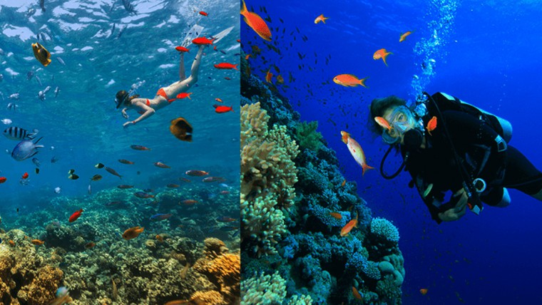 Freediving and Scuba Diving